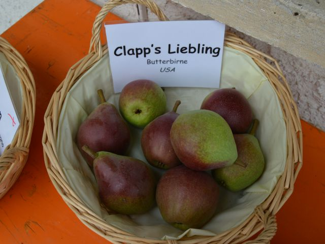 Clapps-Liebling-2